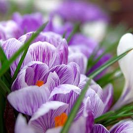Oops by Bryce Wilson - Flowers Flower Gardens ( orange, white flower, shallow dof, grass, purple flowers, close up,  )