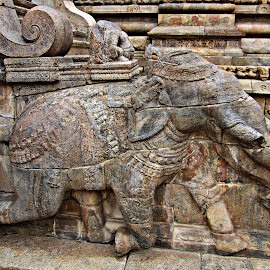 elephant carving on stone by Venkat Krish - Buildings & Architecture Architectural Detail ( #history, #old, #architecture, #stone, #elephant, #sculpture, #temple, #building, #carve )