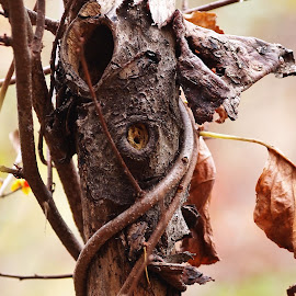 Spirit Tree by Dana Wigton - Nature Up Close Trees & Bushes ( tree,  )