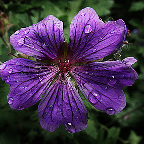 Droplets on flower by Kelly Williams - Nature Up Close Flowers - 2011-2013 ( nature, on, leaves, natural, flower, droplets )