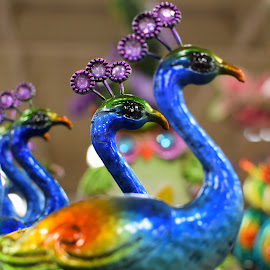 Display of Birds by Mill Tal - Artistic Objects Other Objects