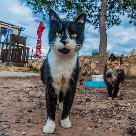3 friends by Ionut Olaru - Animals - Cats Portraits ( cats, cat, friends, cat atta, cat portrait, atack, friend )