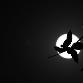 moonlight shining in the night by Samrat Sam - Nature Up Close Leaves & Grasses ( moon, white, leaves, moonlight, black )