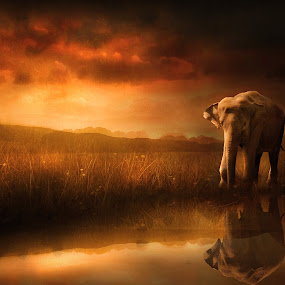 When the Sun Goes Down by Jennifer Woodward - Digital Art Places ( mammals, water, elephants, animals, nature, sunset, reflections, wildlife, sunrise )