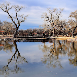 Sandia Lakes Park South by Shawn Thomas - City,  Street & Park  City Parks ( water, reflection, park, lake, pond,  )