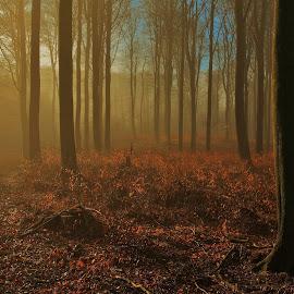 Tåget vintermorgen. by Ove Andersen - Landscapes Forests