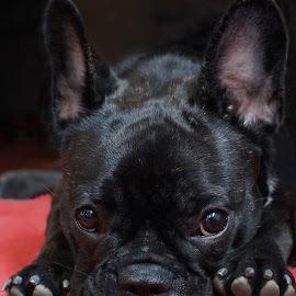 Please? by Krista Nurmi - Animals - Dogs Puppies (  )