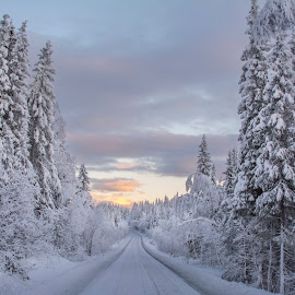 Driving home for christmas by Stian Krane - Landscapes Forests ( clouds, snow, trees, road, sun )