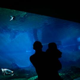 Underwater life by Agnieszka Cybulska - People Family ( blue, penguins, underwater, family, portrait,  )