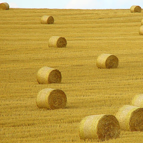 Hay Bales by Thomas Stroebel - Landscapes Prairies, Meadows & Fields ( field, autumn, hey bales )