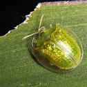Neon green tortoise beetle