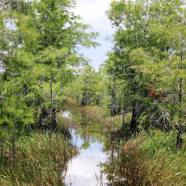 Everglades National Park by Connie Brewer - Landscapes Forests
