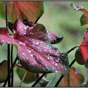 WATER DROPLETS ON LEAF by Patti Westberry - Nature Up Close Leaves & Grasses ( drops, pink, leaf, flower, droplets )