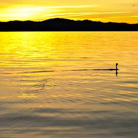 6am by Laura Drake Enberg - Landscapes Sunsets & Sunrises