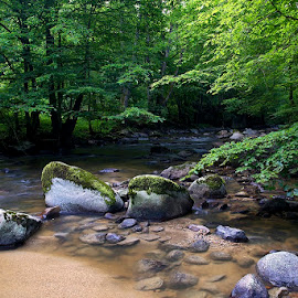 by Siniša Almaši - Nature Up Close Rock & Stone ( forest, view, depth, rocks, nature, light, up close, stones, river, trees, water )