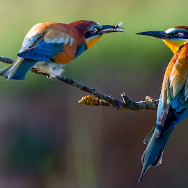 I can give you,what you want -;) by Stanley P. - Animals Birds (  )