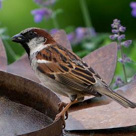 by Marie Schmidt - Animals Birds