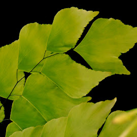 HEARTY LEAVES by SANGEETA MENA  - Nature Up Close Leaves & Grasses (  )