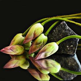 Lotus Buds by Prasanta Das - Artistic Objects Still Life ( lotus, still life, buds )