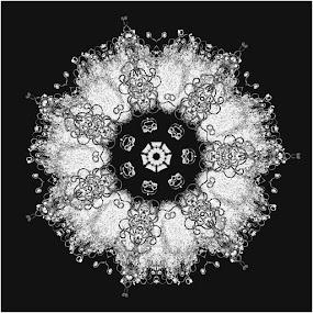 Snowflake Mandala by Pam Blackstone - Illustration Abstract & Patterns ( fibers, b&w, black and white, white, snowflake, symmetry, black, mandala )