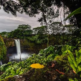 Rainbow Falls, Big Island by Vamsi Sata - Landscapes Forests ( waterfall, rainbow falls, evening, hawaii, big island )