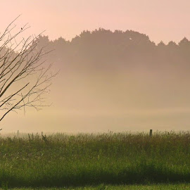Tree in the field by Oleksii Liebiediev - Landscapes Prairies, Meadows & Fields ( wheat, field, dawn, fog, autumn, hay, sunlight, mist,  )