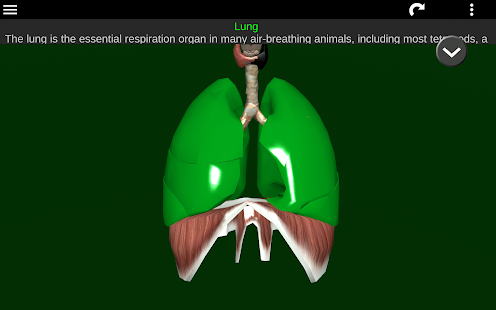 Free Download Organs 3D (Anatomy) APK for Samsung