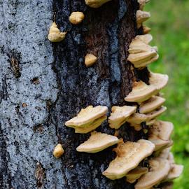 Circle Of Life  5825 by Jim Suter - Nature Up Close Mushrooms & Fungi