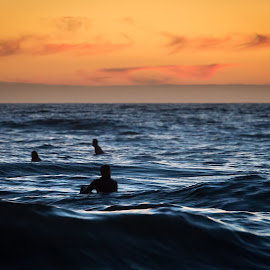 Waves of Tranquility by Dallas Golden - Sports & Fitness Surfing ( sunset, california, waves, ocean, surfers )