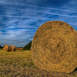 Field Of Hay Bales by Marco Bertamé - Landscapes Prairies, Meadows & Fields ( clouds, field, sky, dry, blue, condensation trail, round, hay bale )