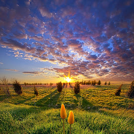 Until Then by Phil Koch - Landscapes Sunsets & Sunrises ( vertical, travel, yellow, love, sky, nature, weather, flowers, light, orange, trending, colors, art, twilight, mood, journey, horizon, rural, portrait, country, dawn, environment, season, serene, popular, outdoors, lines, natural, hope, inspirational, canon, wisconsin, ray, joy, tulips, landscape, spring, sun, photography, life, emotions, dramatic, horizons, inspired, clouds, office, park, heaven, camera, beautiful, scenic, living, morning, field, unity, blue, sunset, amber, peace, meadow, beam, sunrise, earth, garden )