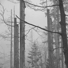 by Dušan Gajšek - Nature Up Close Trees & Bushes ( gozd, nem?ija, ptice, bavarski gozd, narava, potovanja )