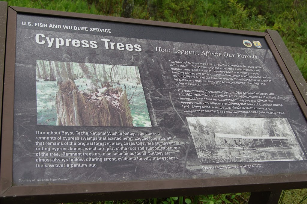 The wood of cypress was a very valuable commodity for early settlers in this region. Old-growth cypress wood was easily worked, very valuable, and resistant to rot. Cypress wood was widely used in ...