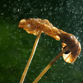 Rainy by Taufiqurrahman Setiawan - Nature Up Close Mushrooms & Fungi