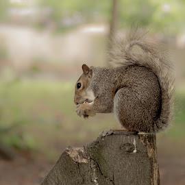 by Jadran Korać - Animals Other ( park, squirrel )