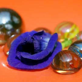 A purple -colored Butterfly Pea Flower   by Mihir Ranjan - Digital Art Things ( arrangement, a purple -colored butterfly pea flower, fine art, purple -colored butterfly pea, closeup, flower,  )