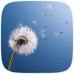 HD Dandelion Live wallpaper Icon