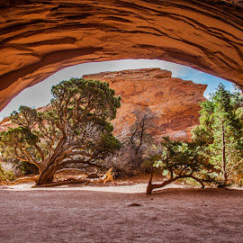 Conformity  by Mark Vogt - Landscapes Caves & Formations ( tree, utah, arches, stone, landscape, conformity, cave, conformity landscape )