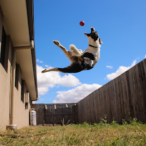 I must go now, my planet needs me. by Ty Hanson - Animals - Dogs Playing ( jumping, awesome, play, puppy, dog, kida )