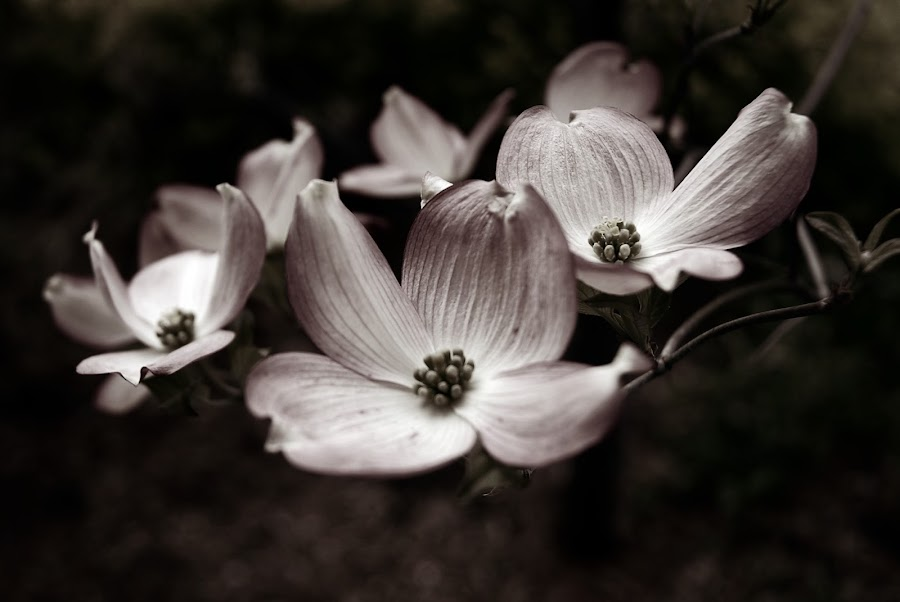 Hints of Spring by Rebekah Miller - Nature Up Close Flowers - 2011-2013