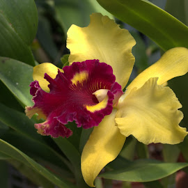 Unique  by Larry Bidwell - Flowers Single Flower