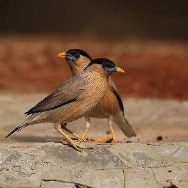 by Sathya Vagale - Animals Birds