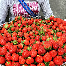 And Strawberries. by Marcel Cintalan - Food & Drink Fruits & Vegetables ( fresh, fruits, strawberries, delicious, strawberry )
