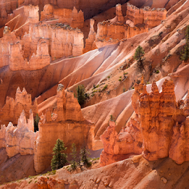 Bryce Canyon, Utah by Phyllis Plotkin - Landscapes Caves & Formations ( utah, formations, canyon, bryce canyon, early morning )