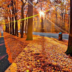Gold Morning by Ruel Tafalla - City,  Street & Park  Vistas