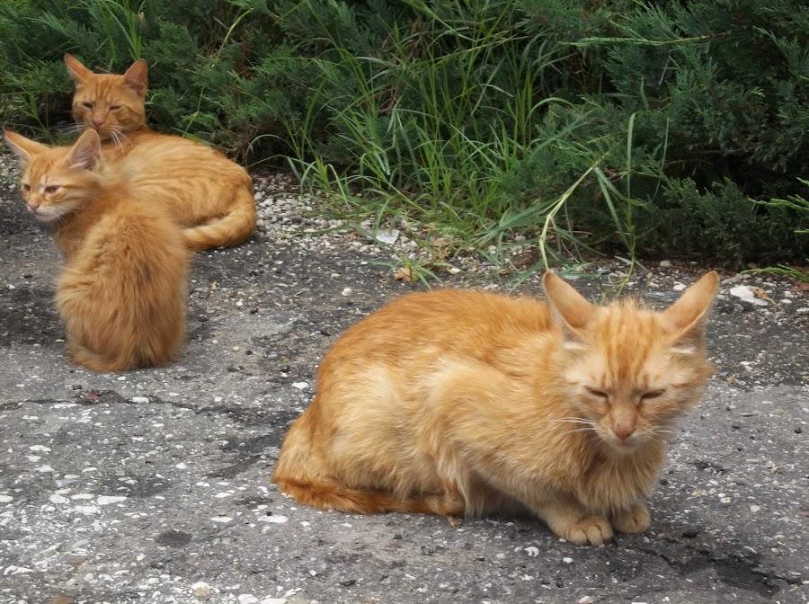 Котки by Georgi Kolev - Animals - Cats Kittens ( котки., храсти., ден., зелен., светлина. )