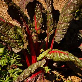by: DD by Desmond Dantzler - Nature Up Close Gardens & Produce