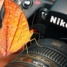 Butterfly Chooses Nikon...What about you? by Alit  Apriyana - Animals Insects & Spiders