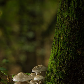Mushroom Cluster by Tracy Burge - Nature Up Close Mushrooms & Fungi