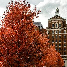 Orange! by Richard Michael Lingo - Buildings & Architecture Other Exteriors ( orange, building, autumn, exterior, trees )